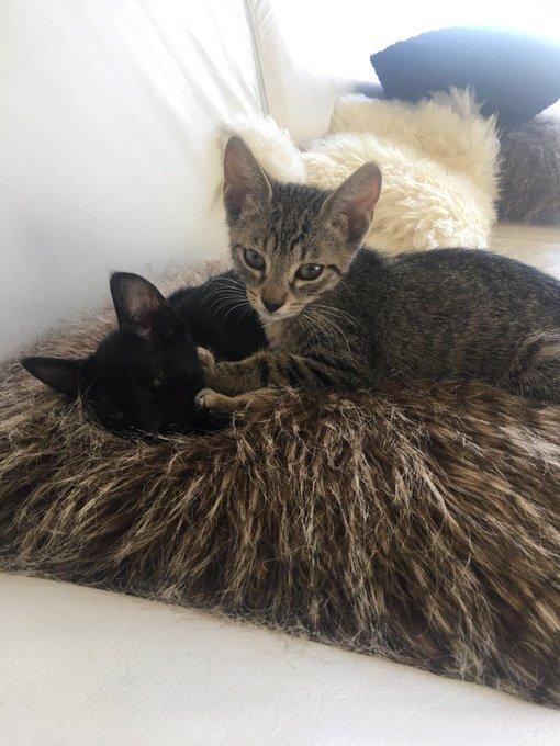 Una amiga encontró estos gatitos en la calle y los rescató. Están en adopción, son sociables y juguetones