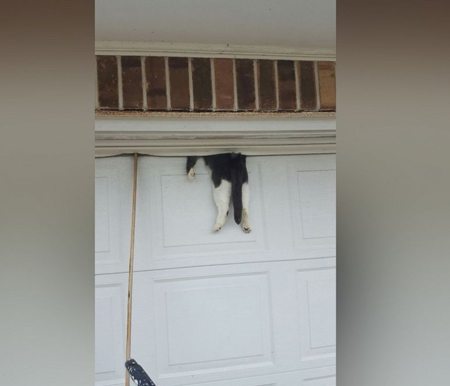 Cat caught in garage door saved by deputy: https://t.co/yqFAQLZsAQ https://t.co/APRKGhln92