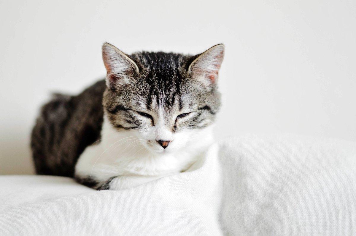 RT @TidyCats: Cats #ShouldBeAllowedAtWork. Duh. https://t.co/LNeHCD5bMW