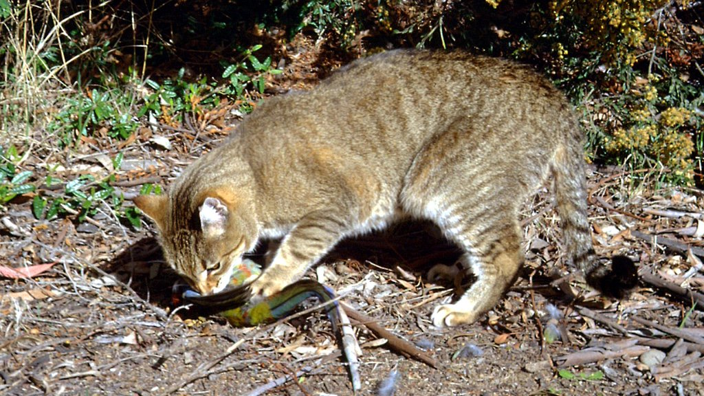 This story about feral cats eating KFC only gets weirder. https://t.co/5Qbsb7lPl0 https://t.co/9cPYIcItL5