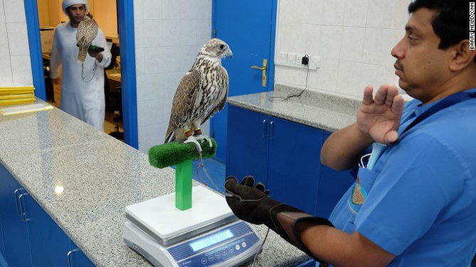This hospital in Abu Dhabi treats more than 11,500 sick falcons every year https://t.co/z6CmRZ6Qh7 https://t.co/Lz3uS6Ydke
