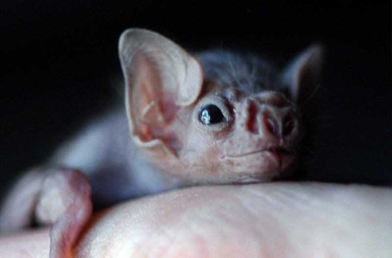 Some vampire bats have started biting humans (and it's probably our fault) https://t.co/1jwuWJX2oV https://t.co/Y9aVDrmNe8