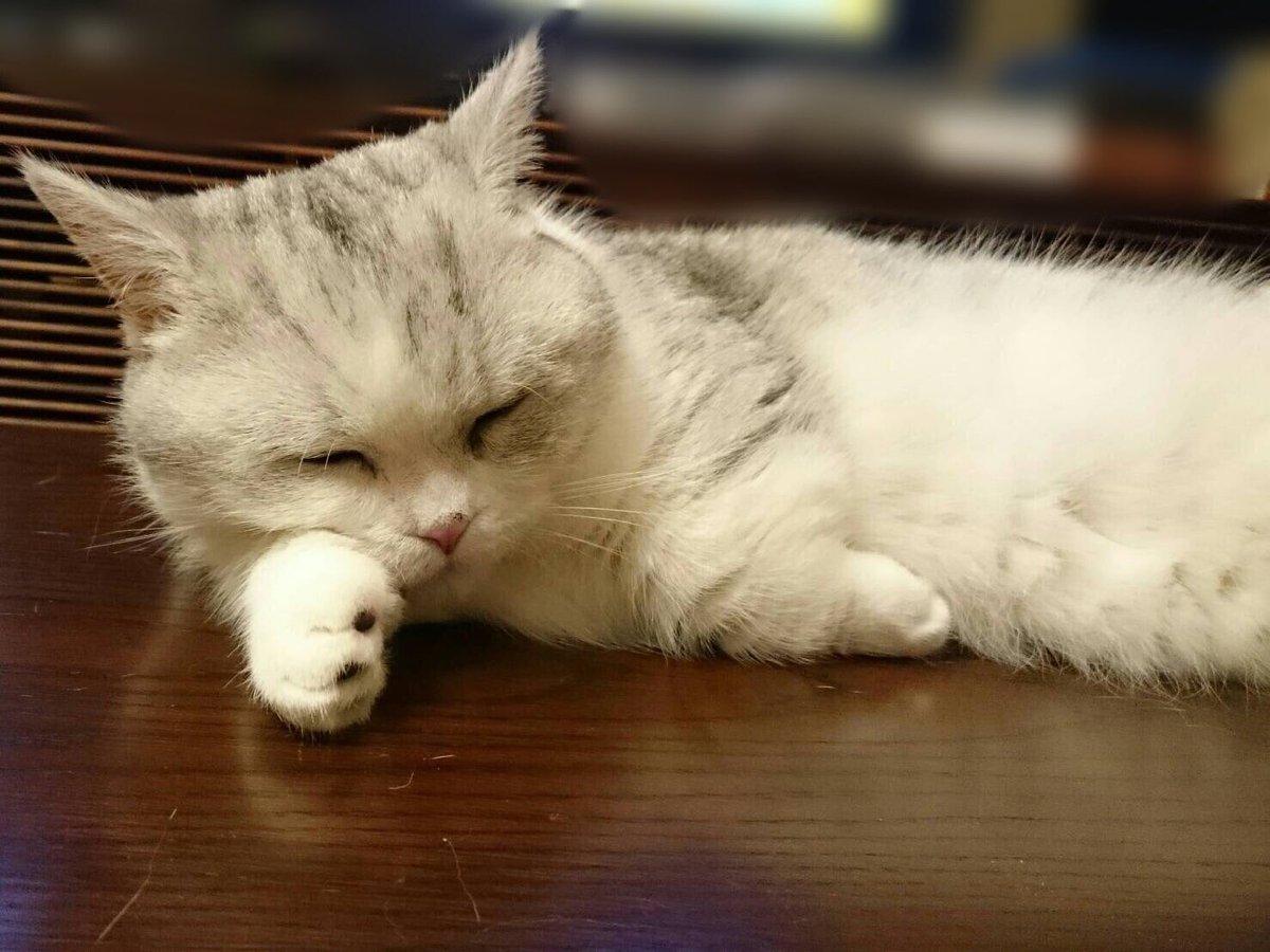 【指原】マンチ・カン太郎&ミヌエット五郎応援スレ★27【猫ーズ】->画像>408枚