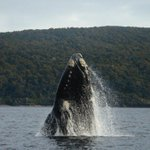 Exploring links between seismic vessels and New Zealand's marine mammals
