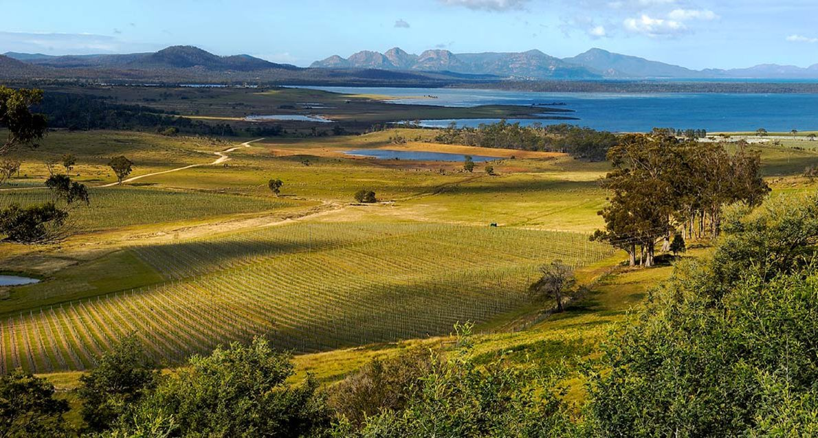 Climate change prompts @BrownBrothers to expand vineyards to #Tasmania in search of cooler temps  #TasteofLandline https://t.co/19o6fQmp3v