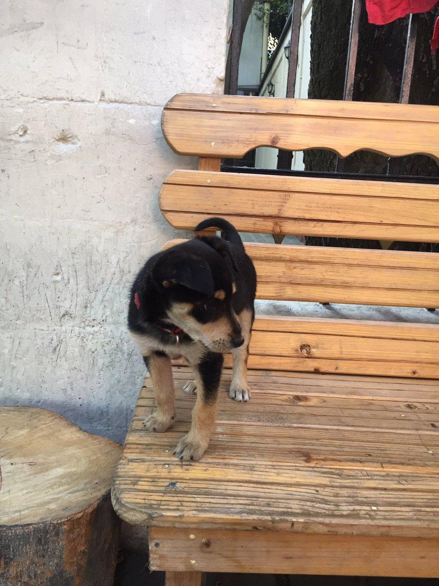 @PrrosPerdidosMX Cachorrita encontrada en #plazaluiscabrera en @LaRomaDF #perrosperdidosMX ayuda!! https://t.co/Lkk5CNvDhq