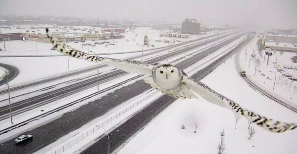 Love this: Traffic camera accidentally captures stunning image of snowy owl in flight https://t.co/6W1onYZDUR https://t.co/eu58XVsmxl