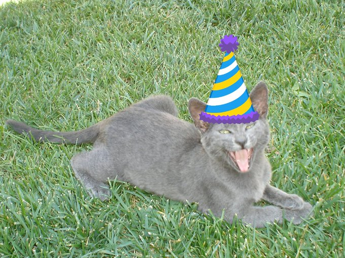 Happy Birthday from me n Blue, my gray cat