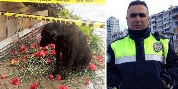 #FethiSekin'in her gün beslediği köpekmiş. Sanırım görüntülerde de var. Şehit edildiği yerde bekliyormuş. https://t.co/UVzNjWMxw0