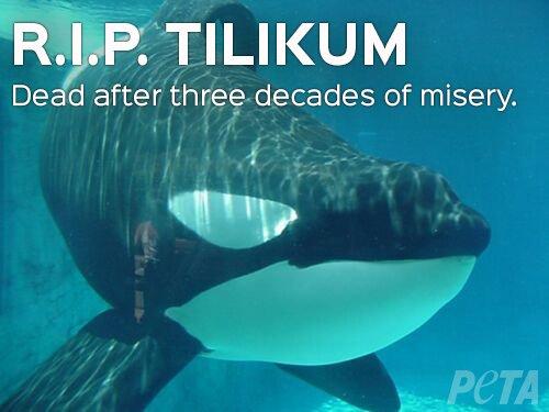 RT @peta: BREAKING: After 33 years in captivity, Tilikum—who was the subject of #Blackfish—is dead. #RIPTilikum https://t.co/Duj9KOEJbo