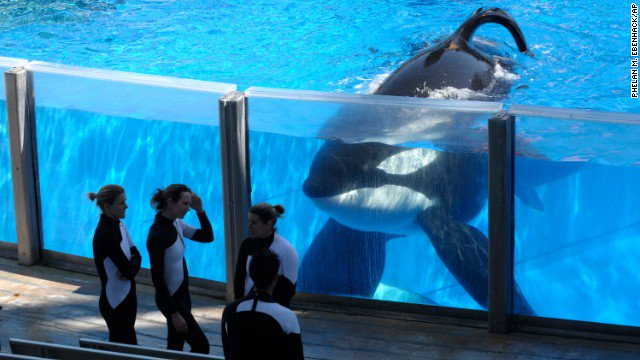 Tilikum, the killer whale at the center of 'Blackfish,' has died, Sea World says https://t.co/tsEIszONMW https://t.co/BA445KVCdC