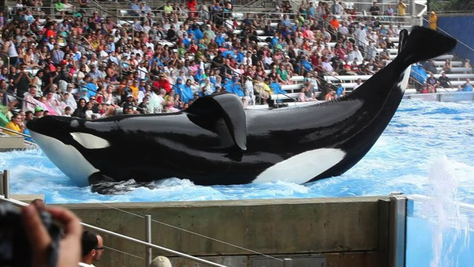 "#Tilikum, the SeaWorld orca featured in the documentary ""Blackfish,"" has died."