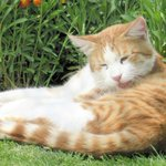 Mechanisms of arthritis in cats uncovered by researchers