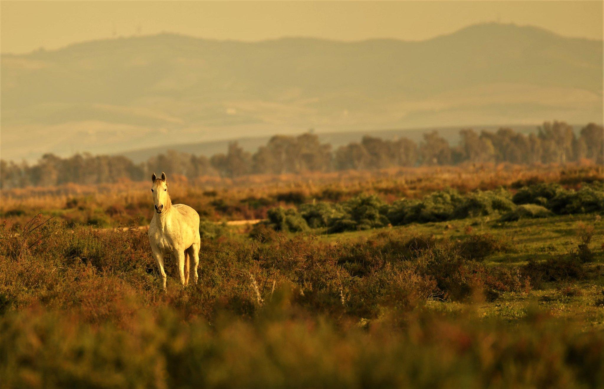 RT @carlosromeroco: Invernada Doñana Veta Palma 😍📷 Nikon D5 @Nikonistas @miradanatural @fotodng @AgendaDeFoto @viveandalucia @MARCANDALUCIA @TurismoDeporAND https://t.co/frlAcywDzi