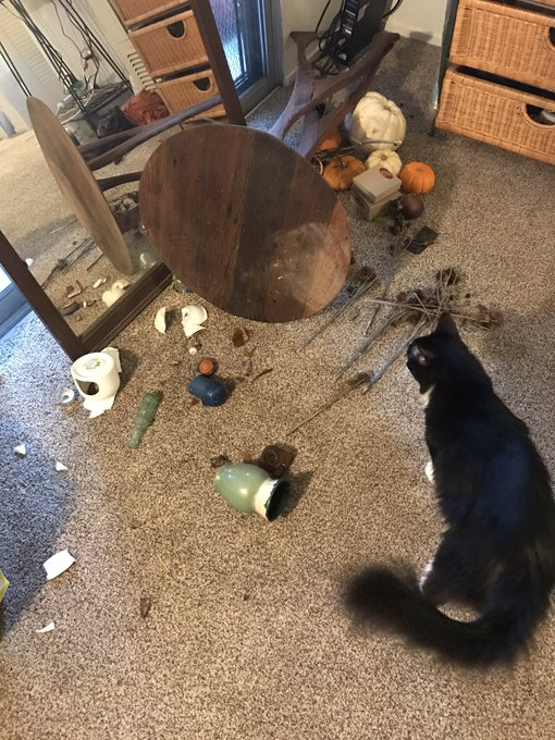 How did my cat do this last night? One of his legs doesn't even work https://t.co/DXGSOCSU09