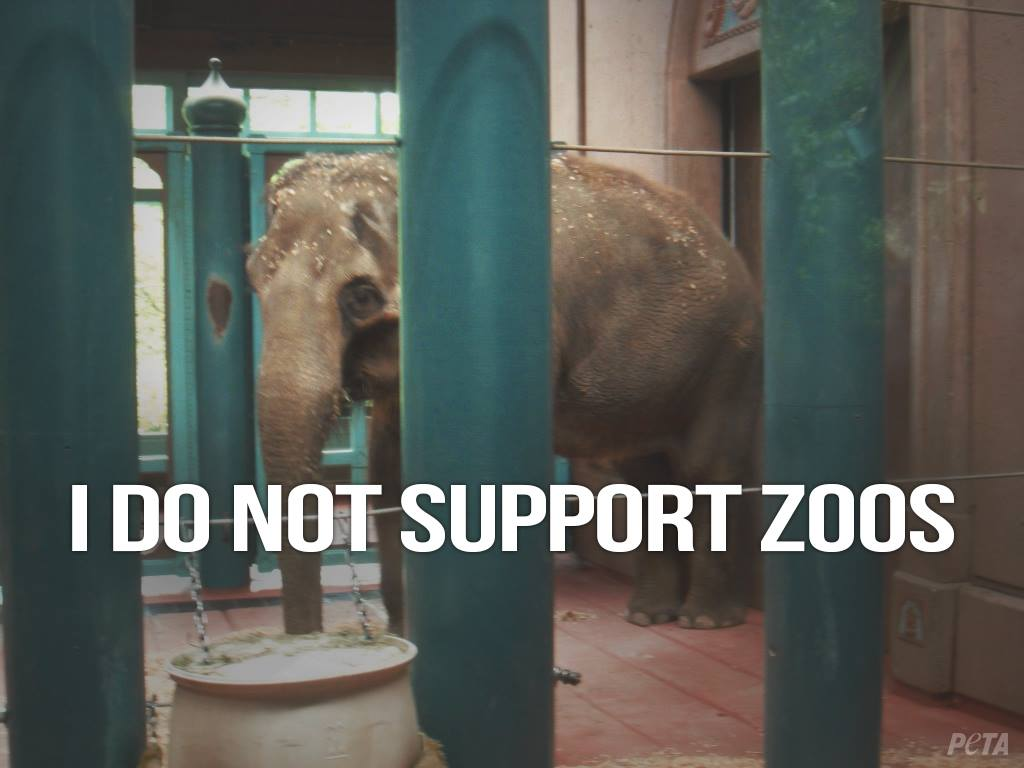 Animals aren't actors, spectacles to imprison and gawk at, or circus clowns. #EmptyTheCages https://t.co/IJmnXCSFqj