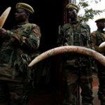 KWS heightens security after slaughter of four rhinos, three elephants
