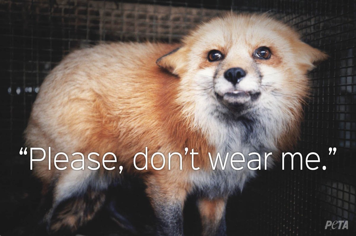 A plea from animals everywhere 💔 #WearYourOwnSkin