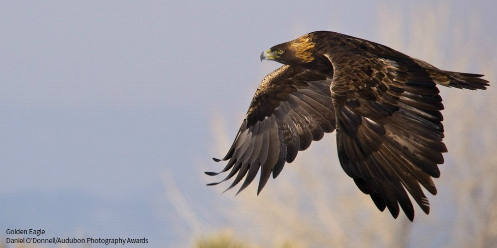 .@BadlandsNPS is a great place to find climate-endangered birds like the Golden Eagle. https://t.co/shCTBCgPOJ https://t.co/7qhxL2l2vv