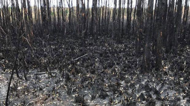 'Black walk' reveals wildlife lost in Coolum's 900ha bushfire