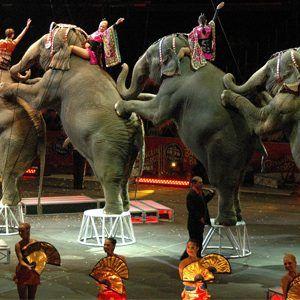 Fim do circo dos @RinglingBros é mais um sinal de que estamos chegando ao fim da era dos animais performáticos. https://t.co/MQn42WcHqb