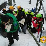 Puppies found alive in Italy avalanche hotel boost hope for survivors