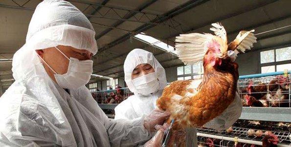 Uganda govt seeks 12 billion to contain bird flu: official
