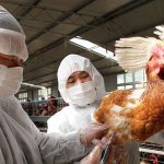 Uganda govt seeks 12 billion to contain bird flu: official