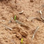 Red meat, maize prices to remain high due to drought