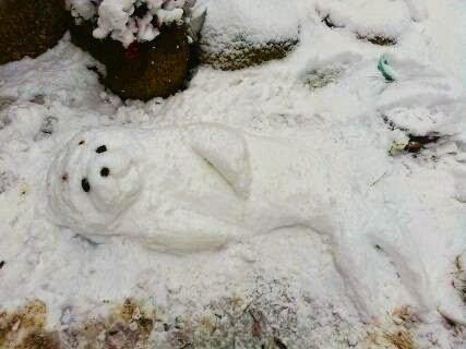 雪ゴマちゃん#少年アシベ #ゴマちゃん