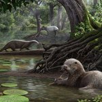 Scientists discover prehistoric giant otter species in China