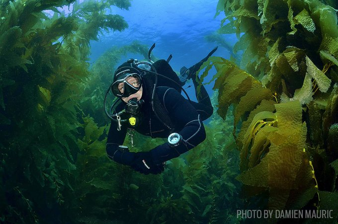 RT @sportdiver: This cold-water gear is perfect for #ScubaDiving a 'cool' new dive site: https://t.co/H29okMvXdD https://t.co/YpDEnBRjRH