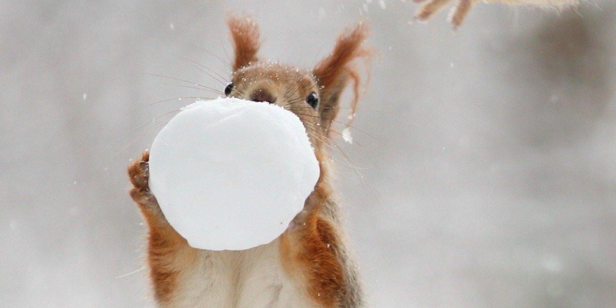 눈덩이를 갖고 노는 다람쥐를 포착했다(사진) https://t.co/t4oS40ptjG