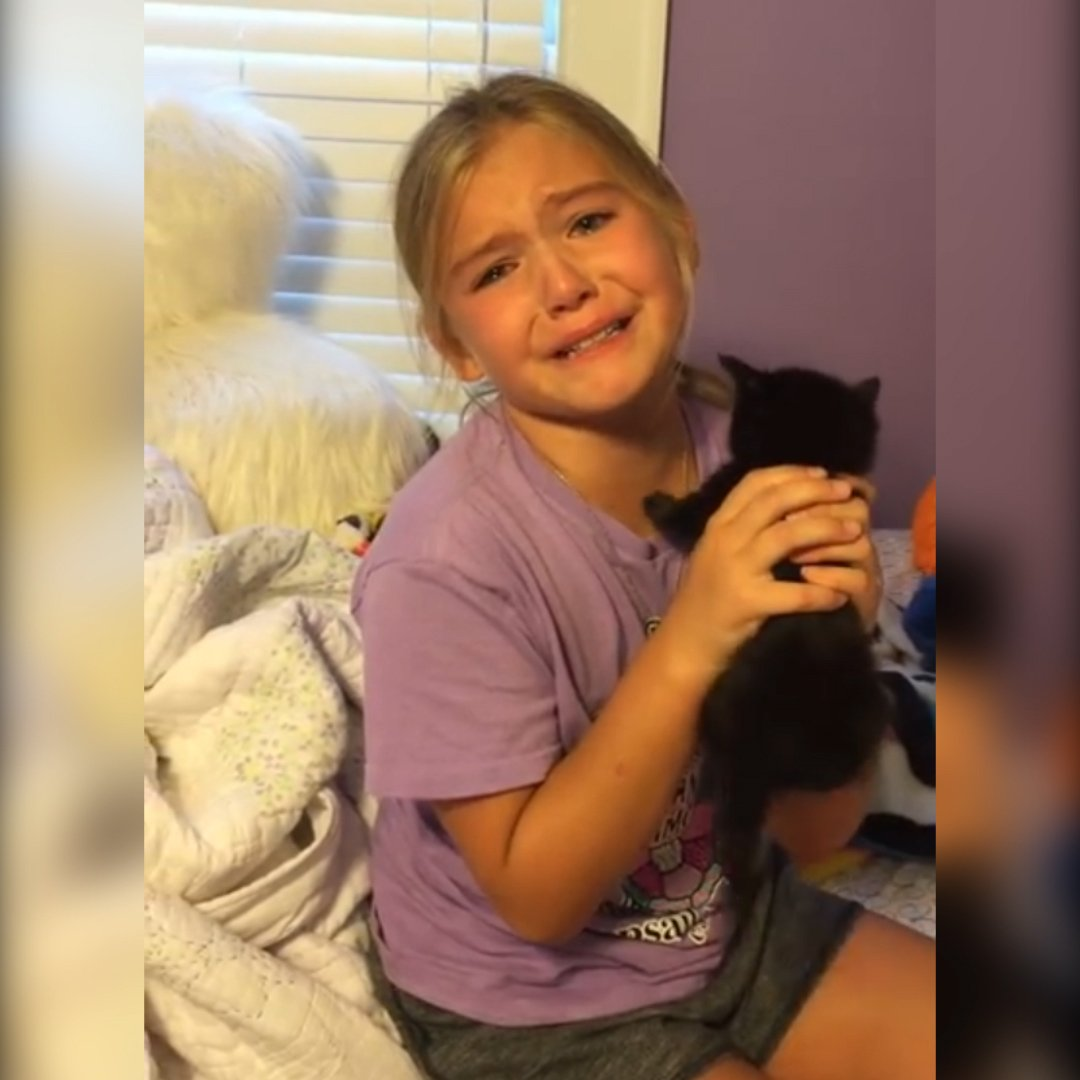 Annesinin hediye olarak yavru bir kedi aldığı minik kızın, sevinçten gözyaşlarına boğulduğu anlar... https://t.co/Qdggo7NBKx