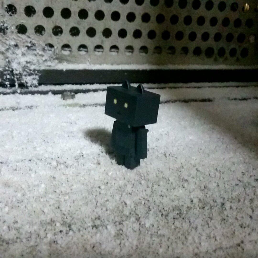 奈良市内 雪が積もりだした!珍しい!#ダンボー#ニャンボー#にゃんぼー#danbo#nyanbo
