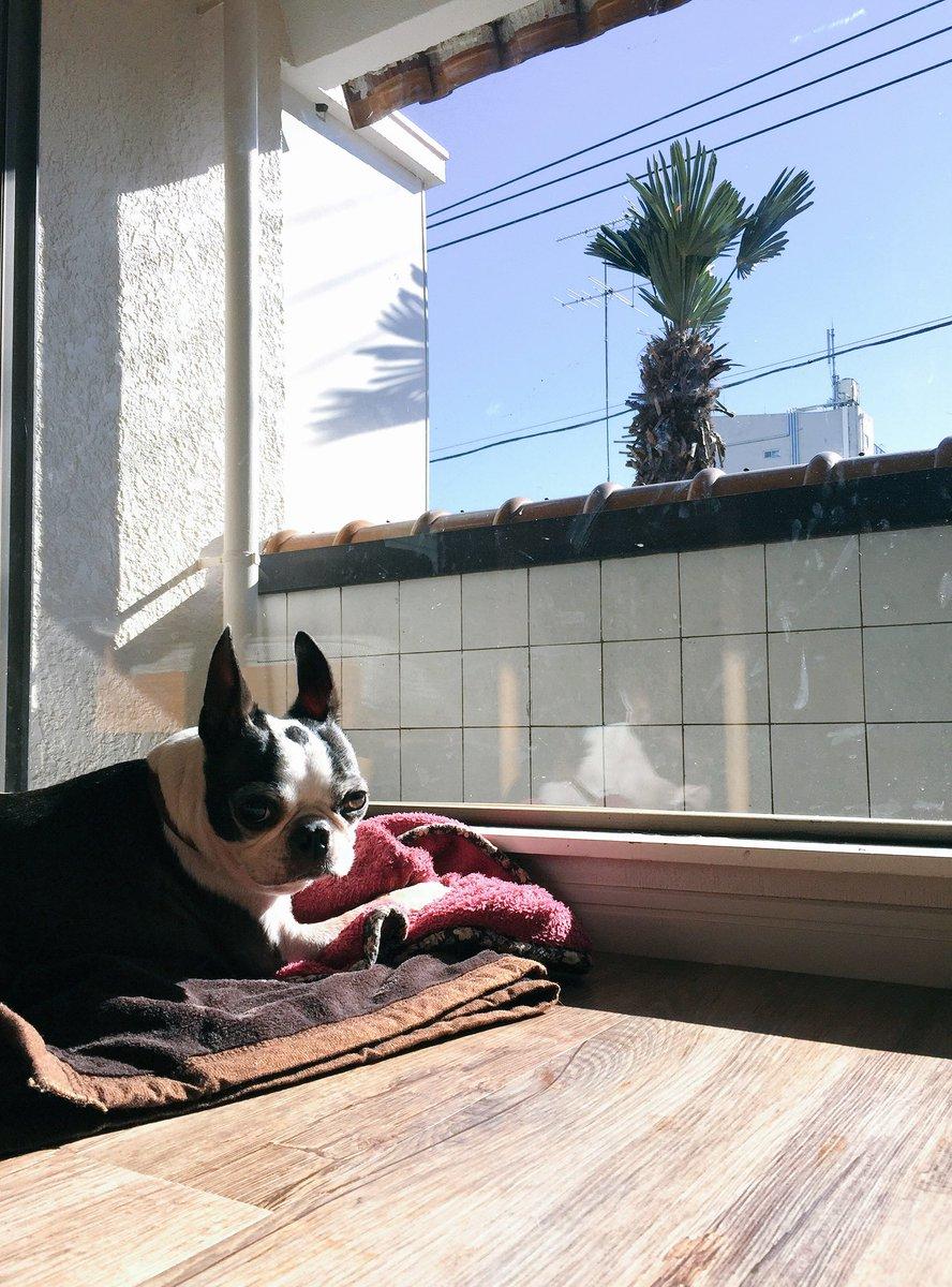 DogHuggyHouseには日向ぼっこゴールデンタイムがあります。日向ぼっこ好きお待ちしております。#doghuggy