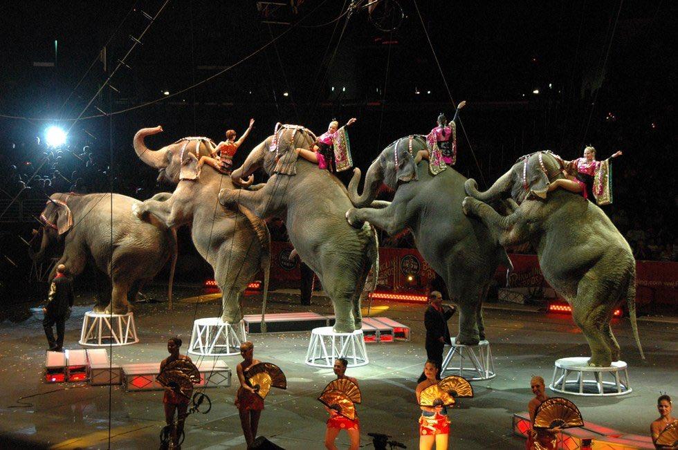 BREAKING: Ringling Bros. Circus Will Shut Down Forever https://t.co/66nVr46CMZ @dodo MT @USDA @peta #RinglingBros https://t.co/0NyJpljIM6