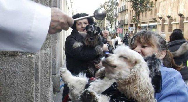 Hoy es San Antón ¿Ya os han bendecido? ;) #madrid