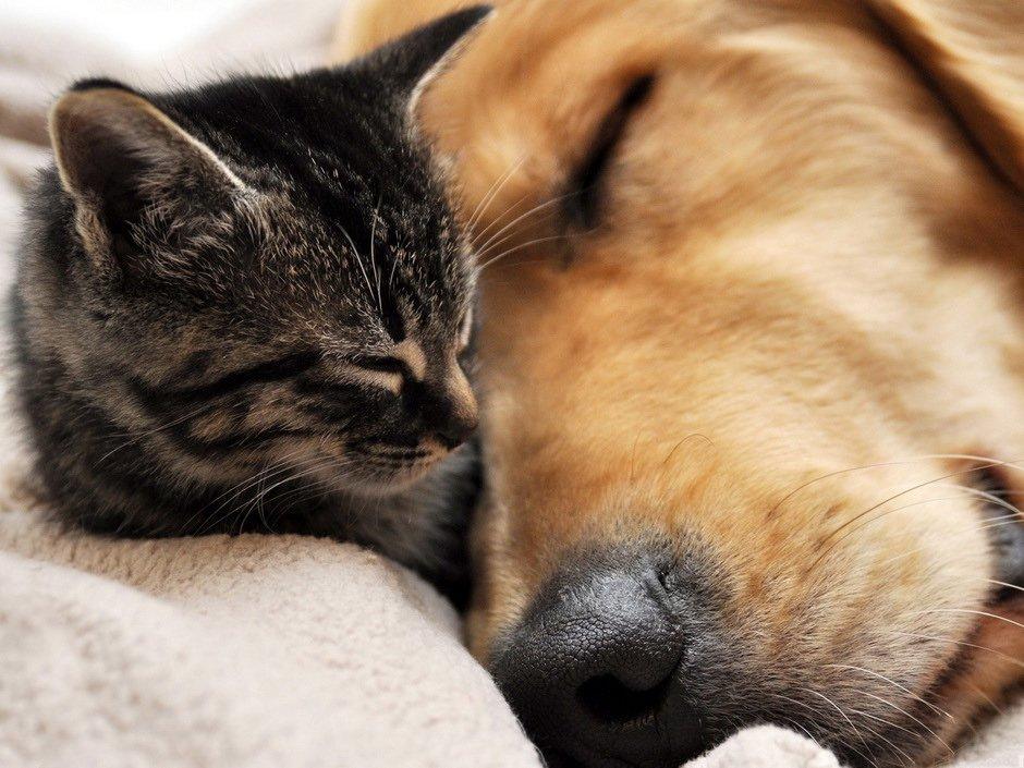 RT @AMalvoy: #FelizMiércoles #HappyWednesday #AdoptDontShop #AdoptaNoCompres #adopt #dog or #cat https://t.co/gWp24exVmL
