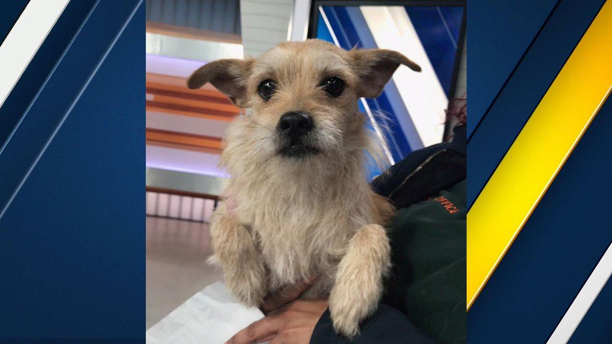 Meet Peaches, a female terrier mix who needs a loving home