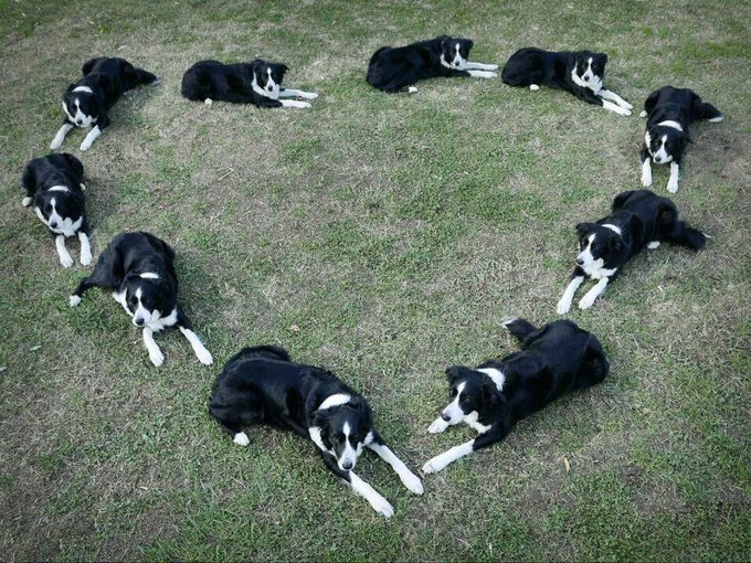 1 pic. Here is a picture of dogs lying in heart shape followed by some selfies. Have a kick ass day https://t
