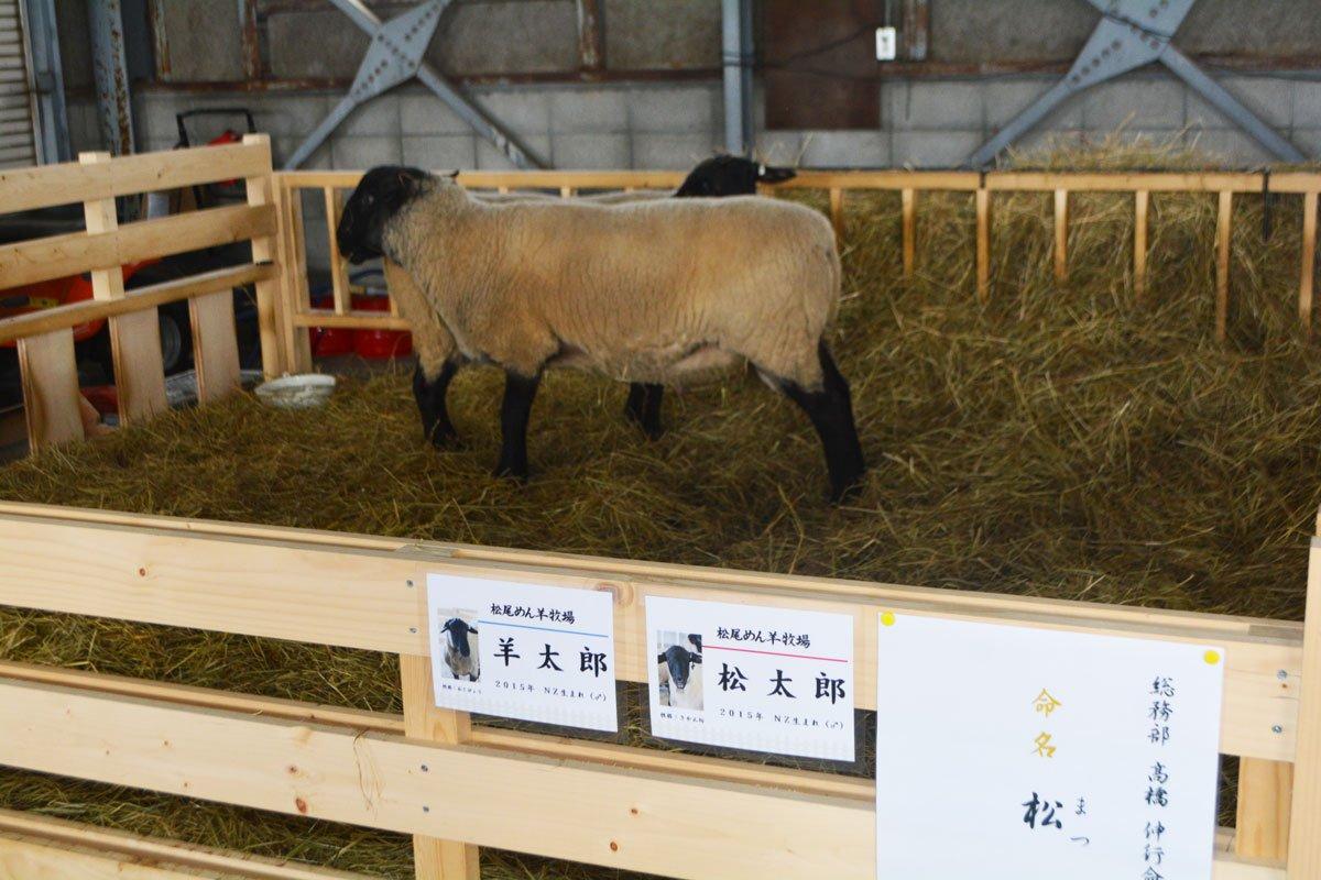 (´-`).。oO(あ、もちろんニュージーランドから来た「松太郎」と「羊太郎」、御料牧場から来た羊たちも元気です!)#北