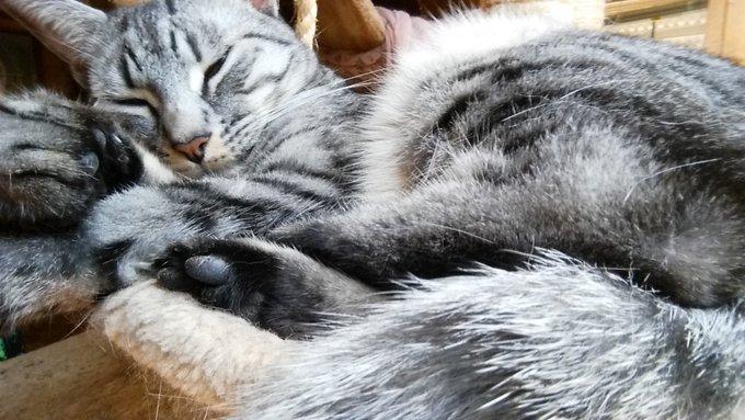 1 pic. Al is the sleepiest of kitties https://t.co/8ptGc7uGzP
