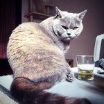 若い頃のまるみ…光の具合が…どなたかこの写真を加工して、ルパン三世の石川五ェ門風にして欲しい…笑#ねこ #猫 #ブリティ