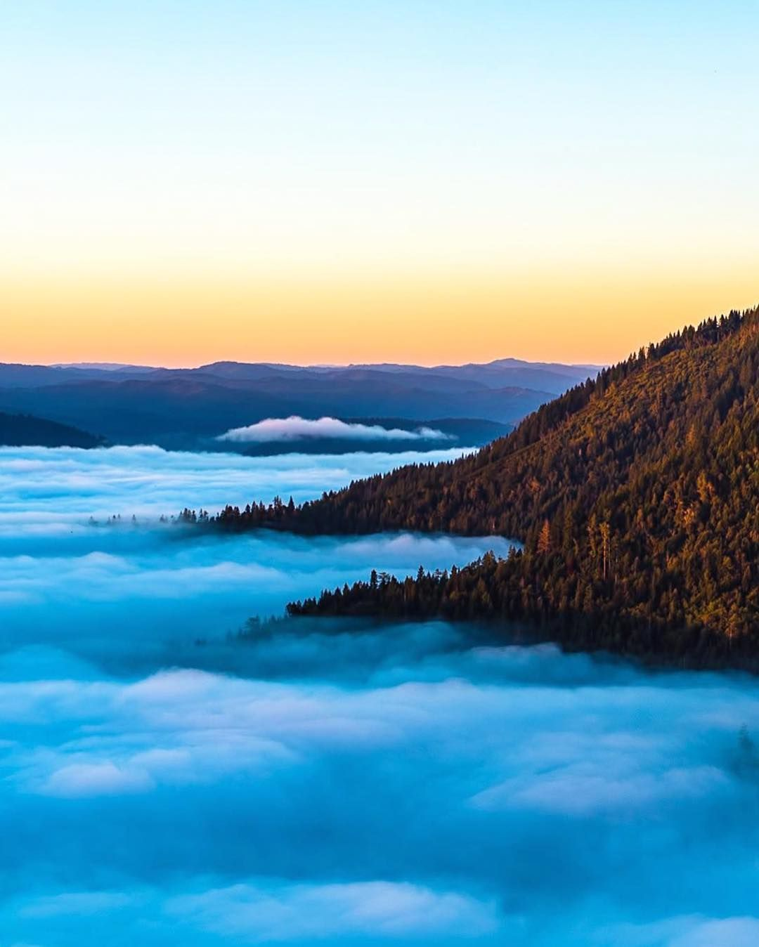 Rising above the clouds ☁️ ☁️ ☁️ in Redwood National Park | Photo by Andy Best (@andy_best on IG) https://t.co/f5s3QSNkSw