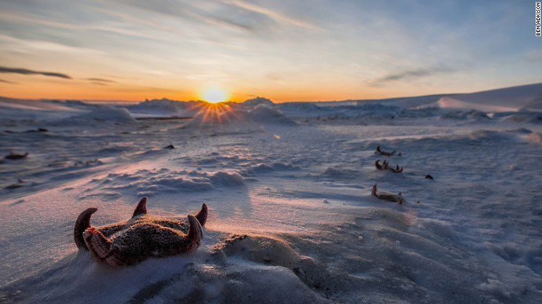 Life on the ice edge The shifting world of Antarctica