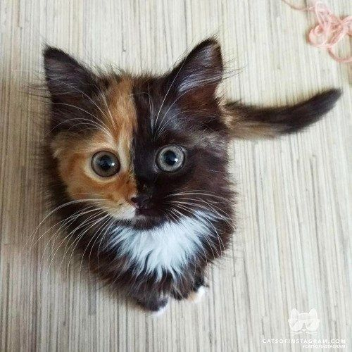 Cutest two-faced S.O.B. you will ever meet https://t.co/Ym15IPH8yp