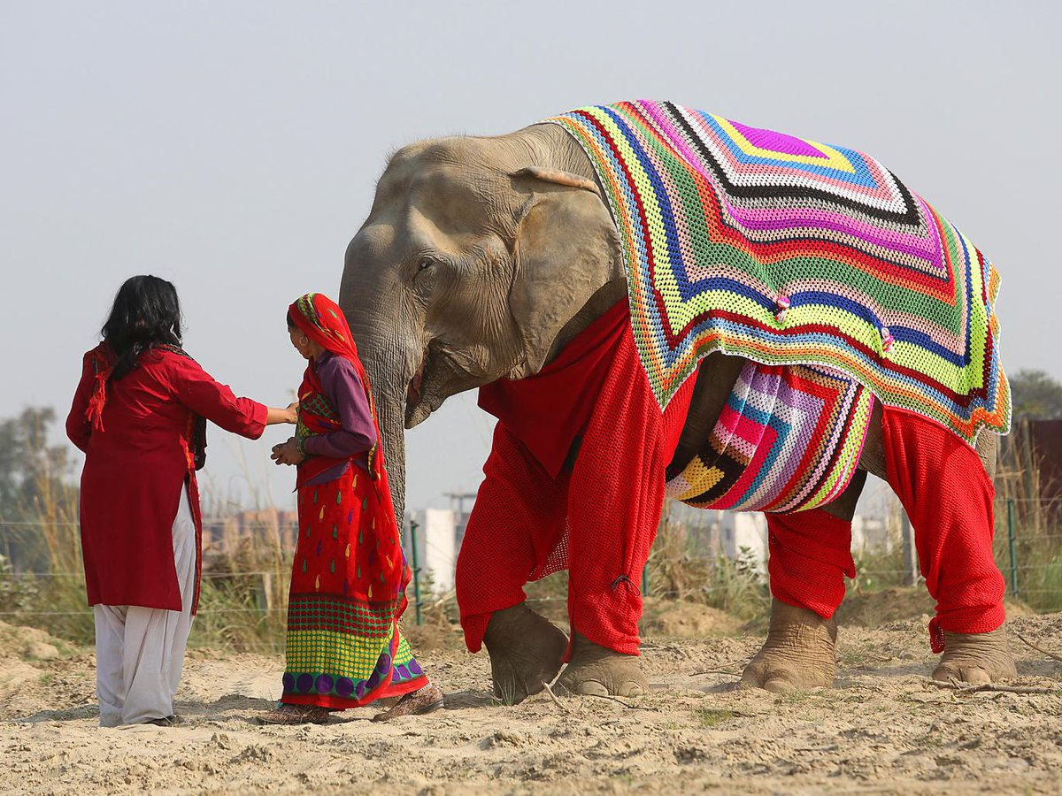 Villagers are knitting jumpers for elephants to protect them from near-freezing temperatures https://t.co/kJMCNKJDNj