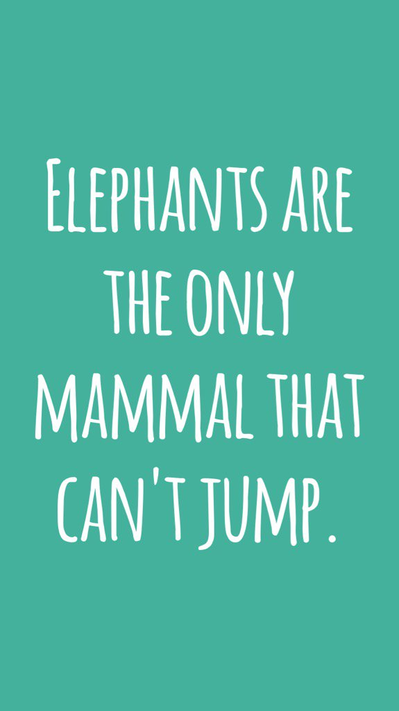 Elephants are the only mammal that can't jump. #didyouknow https://t.co/djxeuh0s3A https://t.co/Qwy9GIkbT9
