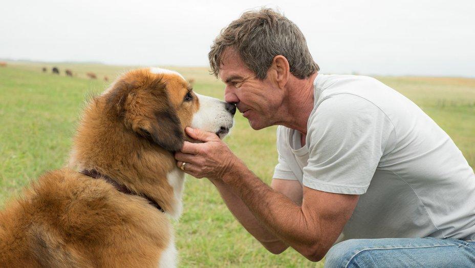 """Premiere de """"4 Vidas de um Cachorro"""" é CANCELADA!"""